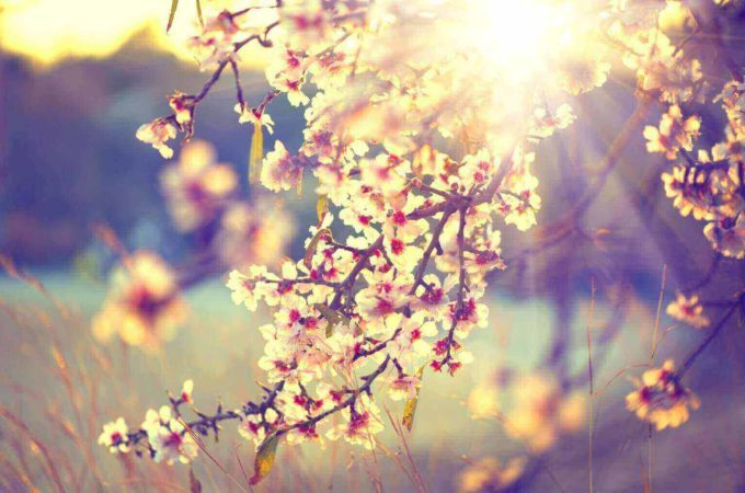 Feeling Lethargic in Spring? Here's why!